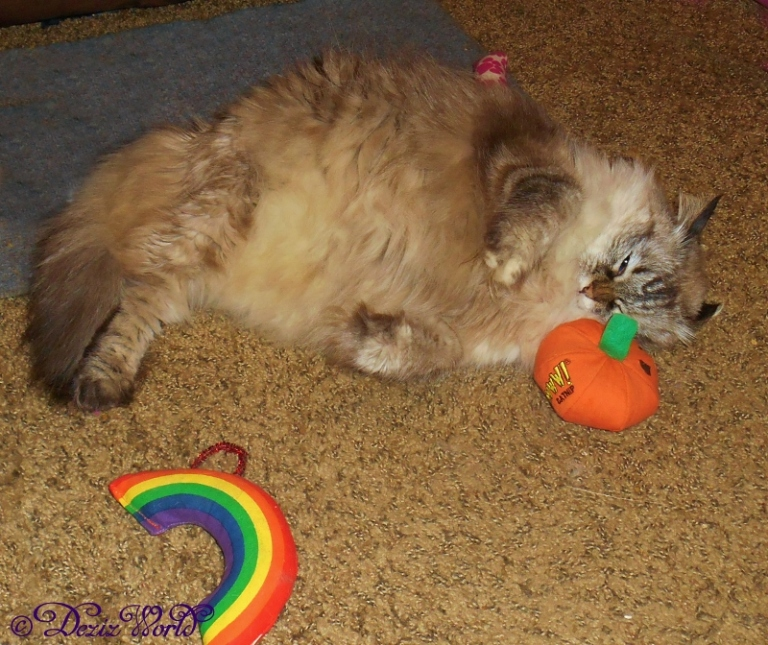 Dezi plays with the Yeowww nip toys