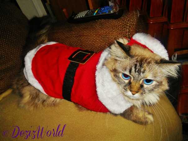 Dezi in a Santa Suit including the hat