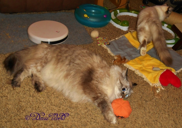 Dezi plays with the Yeowww Orange while Raena walks away