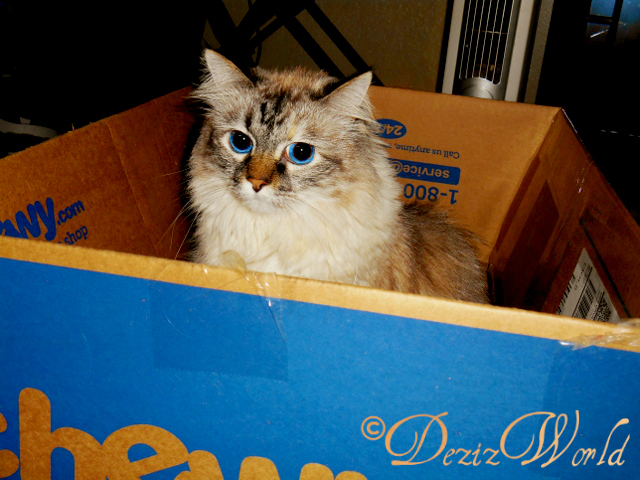 Dezi sits in a chewy box