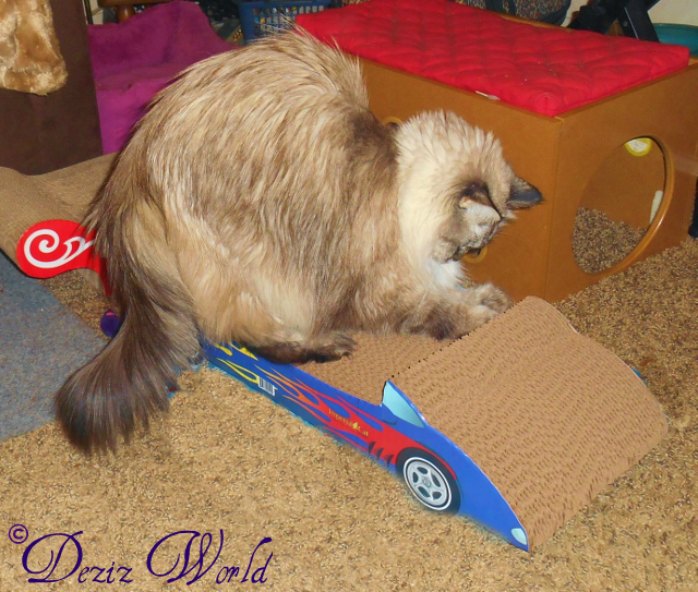 Dezi scratching the cardboard race car