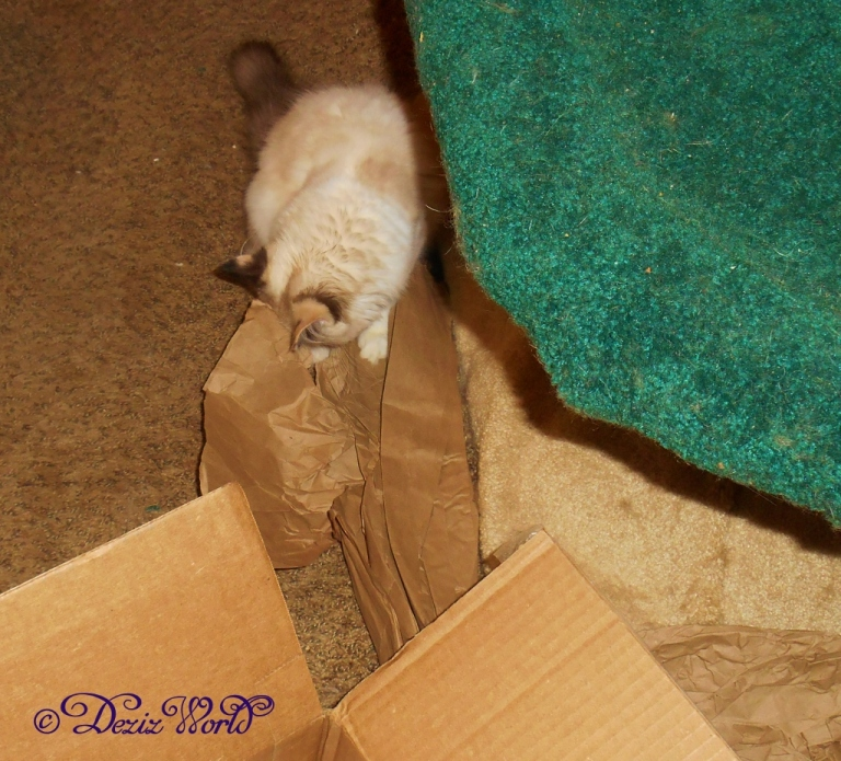 Raena plays with the chewy box packing paper