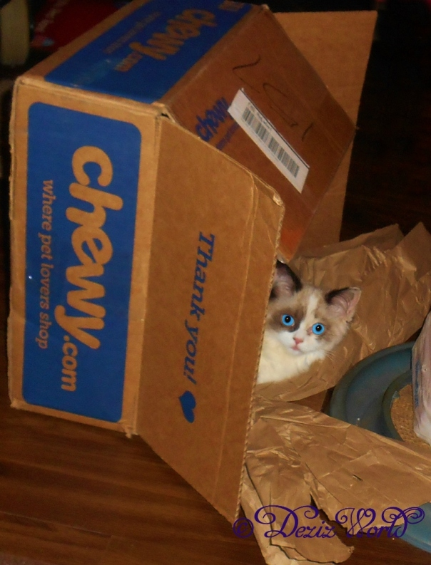 Raena peaking out of a chewy box