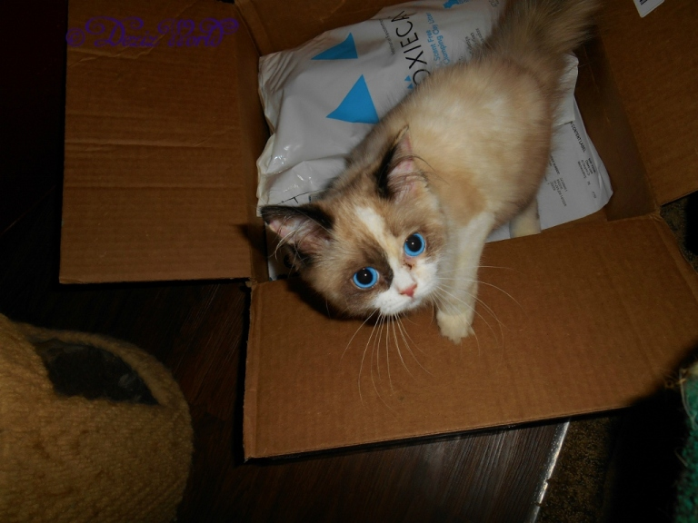 Raena crawling over the contents of a chewy review box