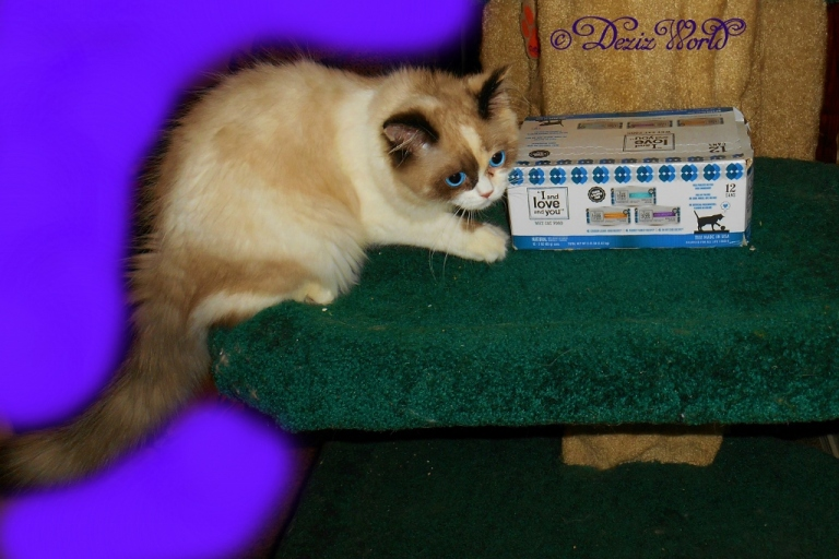 Raena poses with a case of I and Love and You cat food