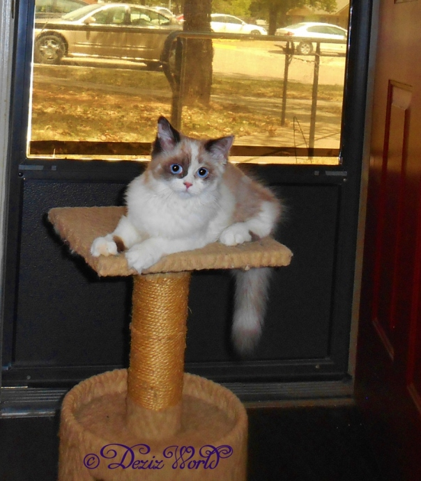 Raena laying on perch
