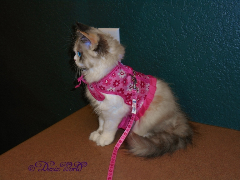 Raena harness profile pose
