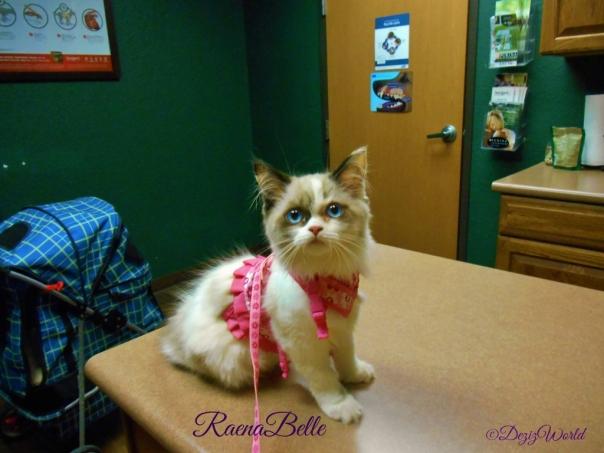 Raena posing at the vets