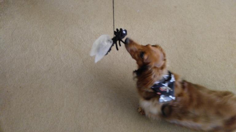 Ernie fly fishing
