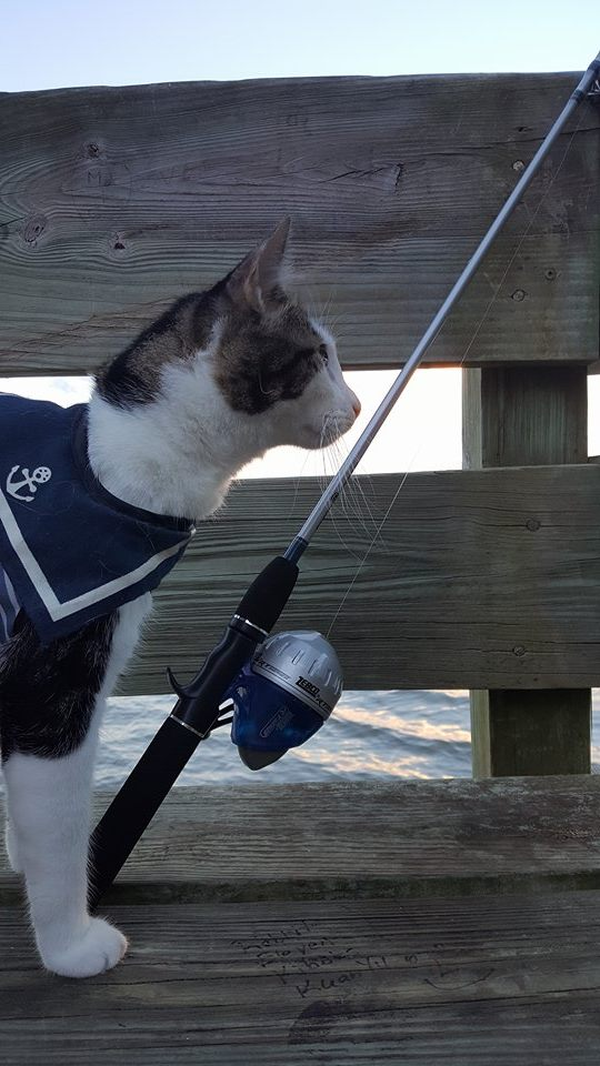 Purrseidon fly fishing