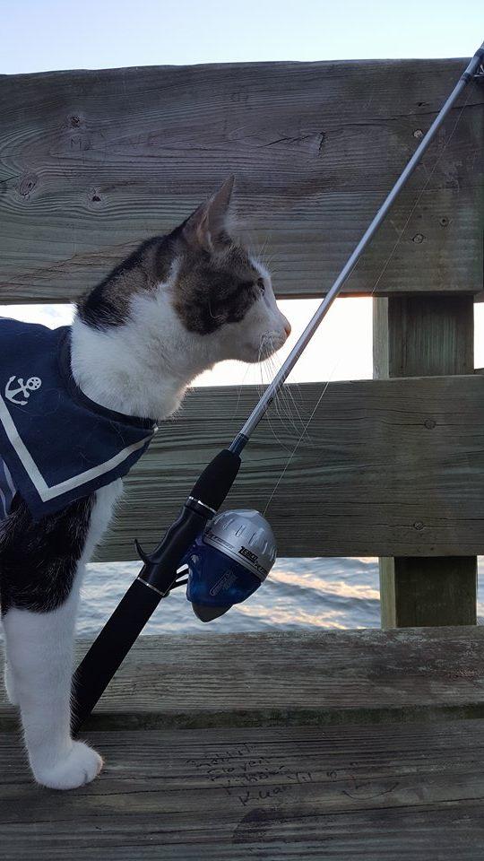 Purrseidon fly fishing
