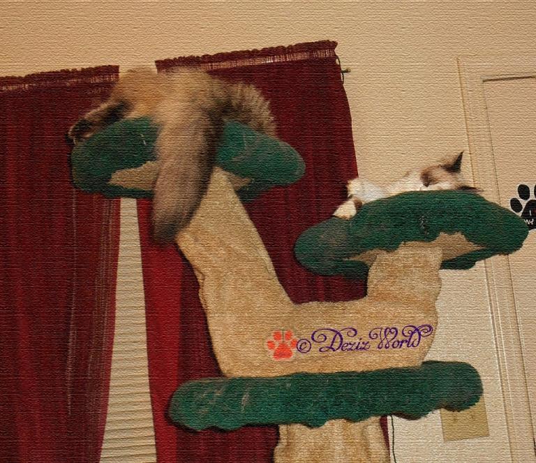 Dezi and Raena sleep on the lLiberty cat tree texturized with photoshop