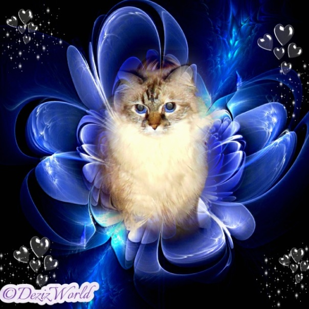 Dezi in a frame surrounded by blue flower petals