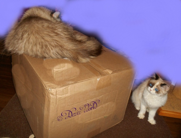 Dezi lays on box while Raena looks for her