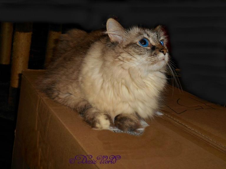 Dezi sits on a box