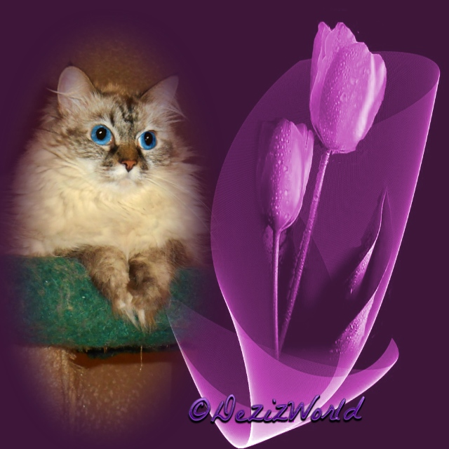 Dezi in a frame with purple tulips