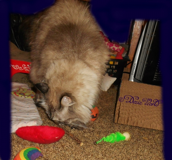 Dezi amid the Yeowww nip toys and silvervine stick