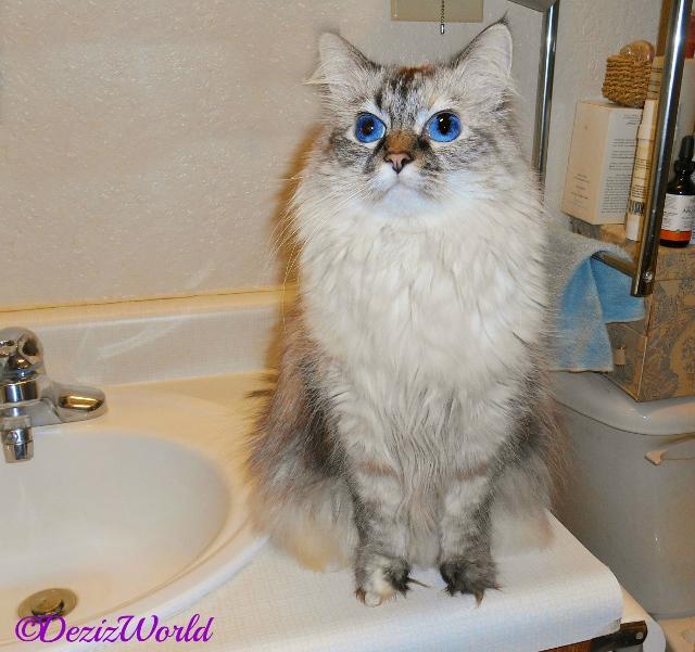 Dezi sits on the bathroom counter