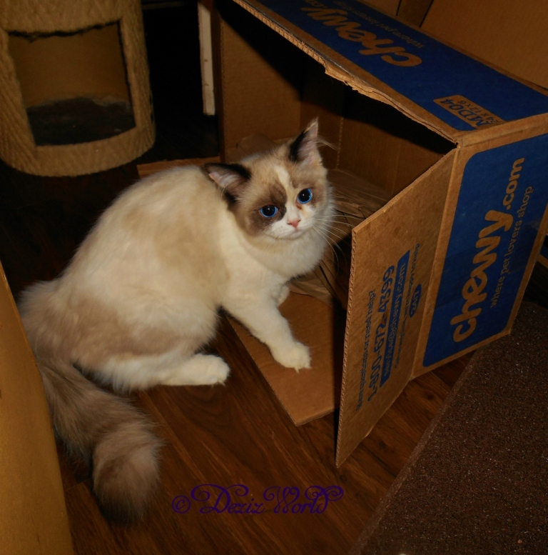 Raena sitting iat her box while giving an angry look