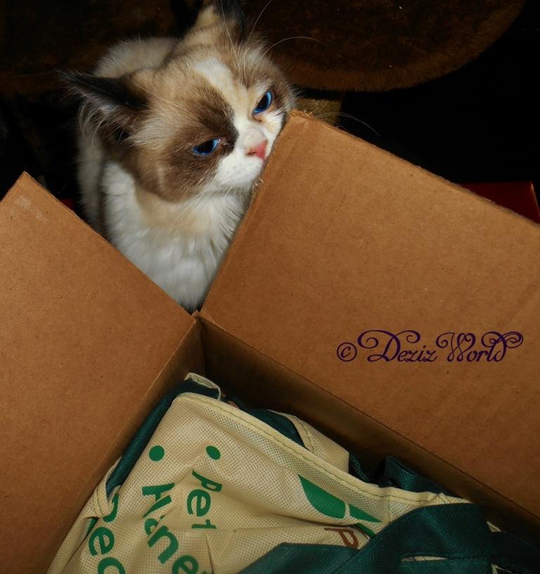 Raena checks out box