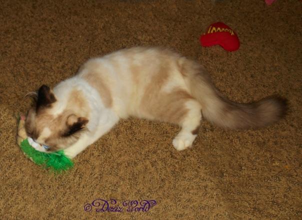 Raena plays with the hedgehog