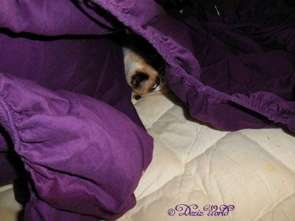 Raena hiding in the sheets