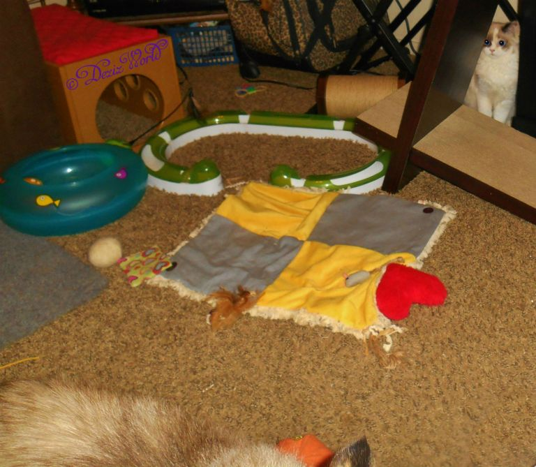 Dezi's tail and Raena on the scratcher