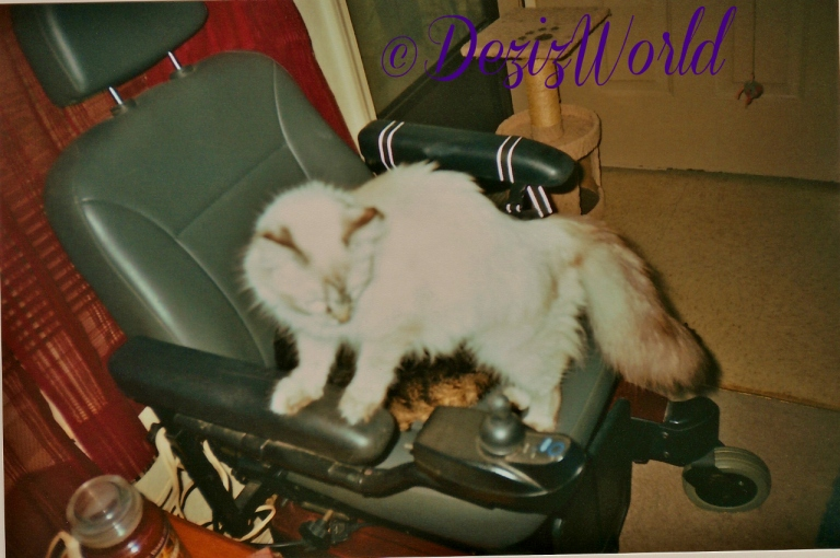 Dezi and Lexi in the wheelchair