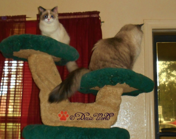 Dezi looks out while Raena surveys the living room