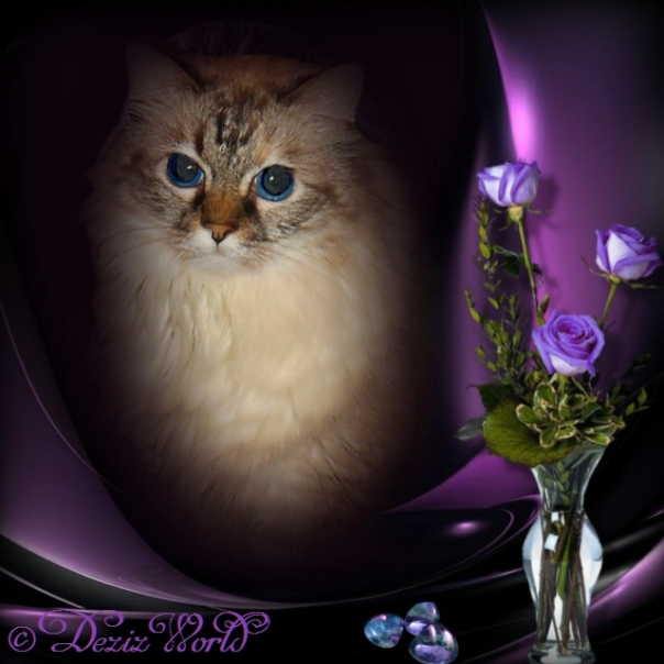 Dezi in a purple frame with purple roses on the side