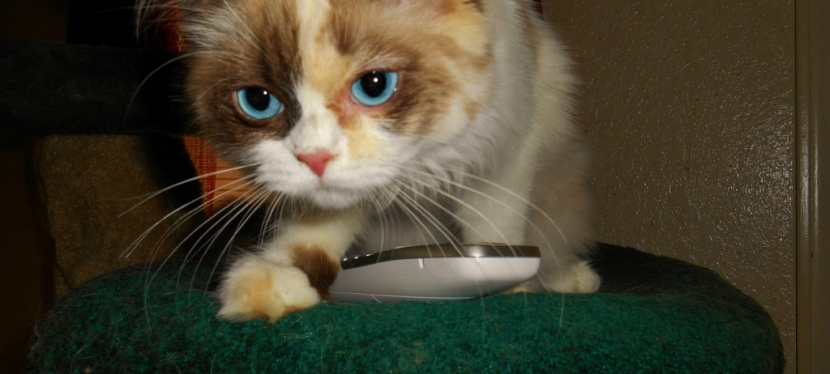 Service Cat Monday: Calling For Emergency Help Options Part1