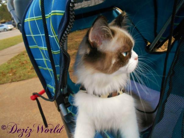 Raena in stroller
