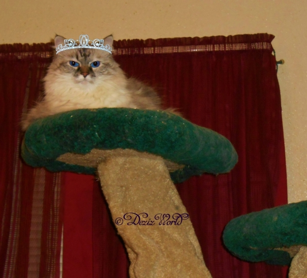 Dezi with a tiara sitting on the Liberty cat tree