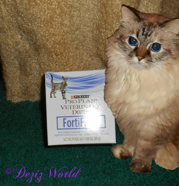Dezi with Purina FortiFlora Probiotics for Cats.