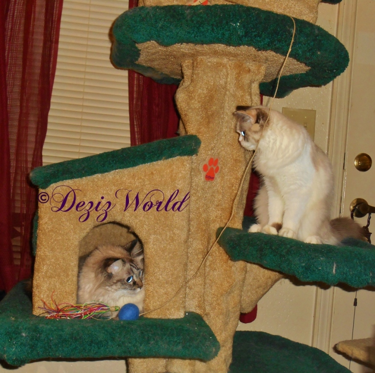 Dezi and Raena on Liberty Tree looking at each other