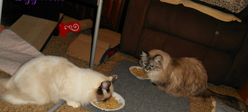Service Cats: Feline Nutrition: The Obligate Carnivore