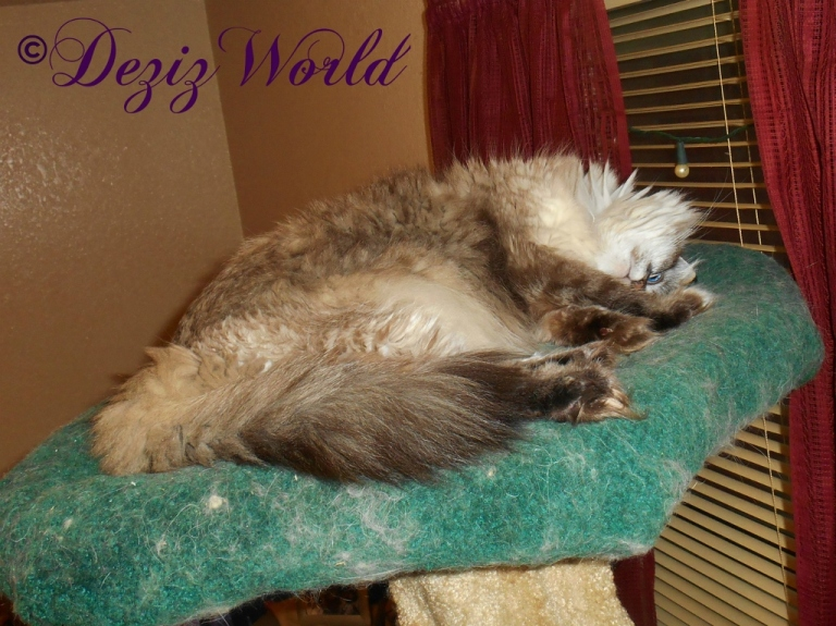 Dezi trying to nap on the Liberty cat tree