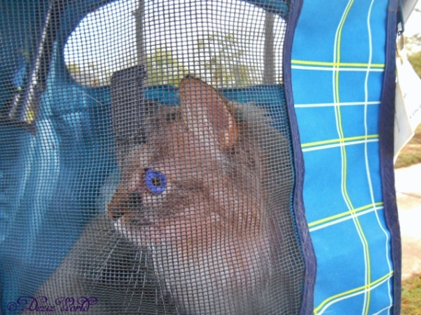 Dezi looks out back of stroller