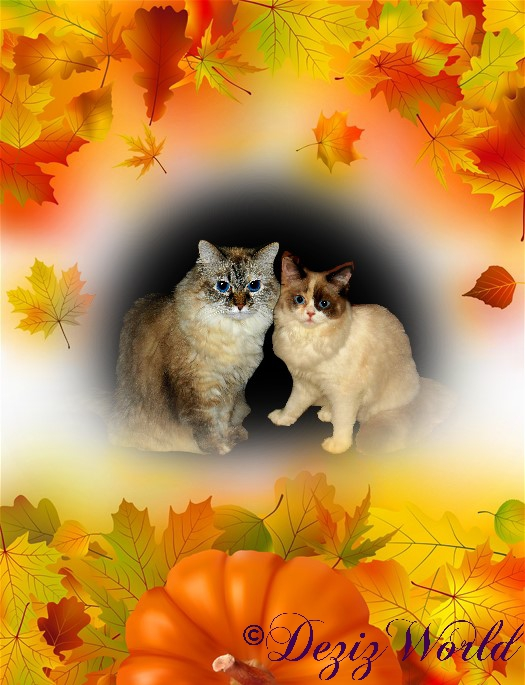 Dezi and Raena in a fall themed frame with a pumpkin and orange, yellow and green leabes