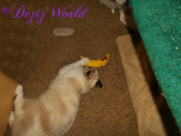 Raena plays with her Yeowww nip nanner
