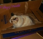 Service Cats: Surviving A RemodelIntact