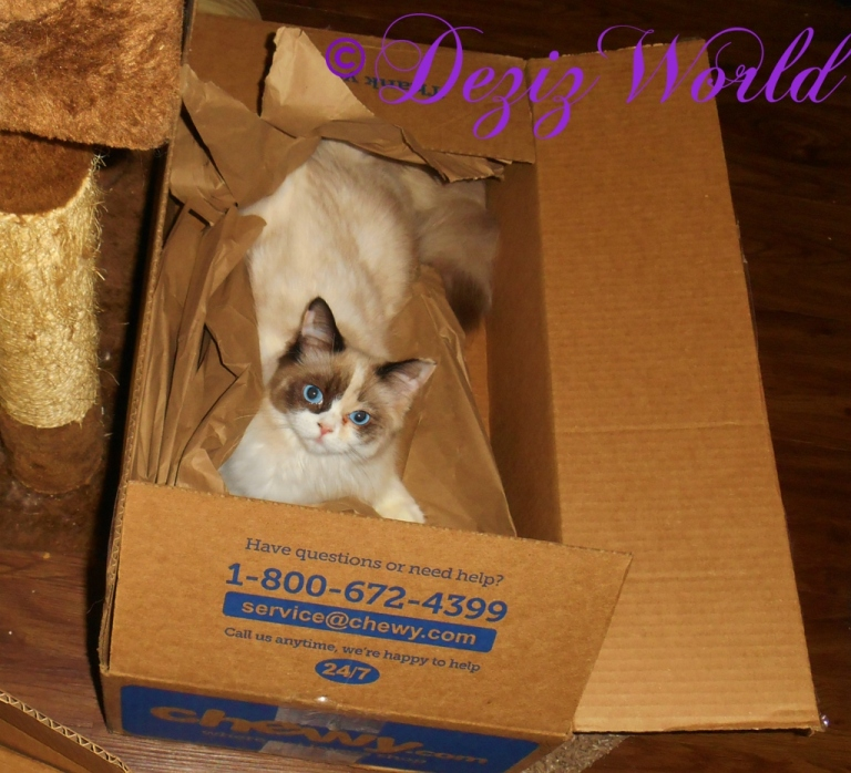 Raena plays in a chewy box