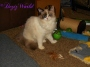 Raena Answers the Question: What Is A Ragdoll Cat