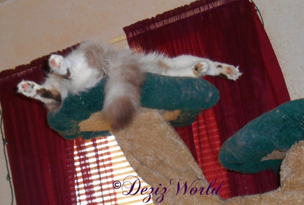 Raena conked out on the Liberty cat tree
