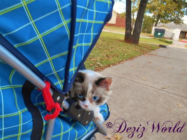 Raena rides in stroller