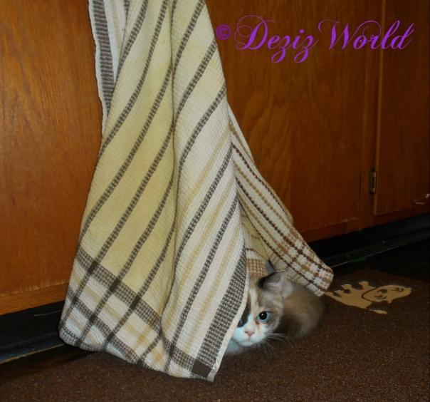 Raena hiding behind kitchen towel