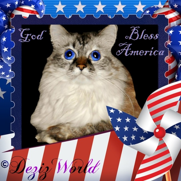 Dezi in an American Flag frame