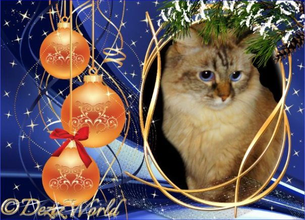 Dezi in a blue Christmas frame with orange balls.