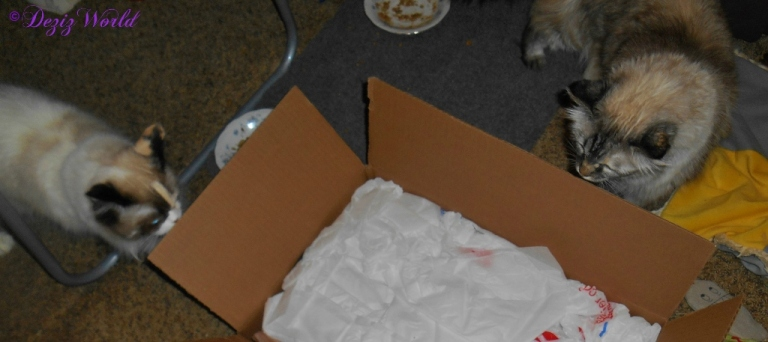 Dezi and Raena look into a box full of goodies