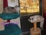 Service Cats: Raena Calls ForHelp